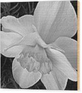 Daffodil Study Wood Print