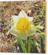 Daffodil Under Water Wood Print