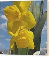 Daffodills In Spring Wood Print