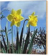 Daffodils 2 Wood Print