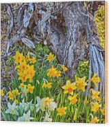 Daffodils And Sculpture Wood Print