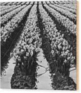 Daffodils Forever Wood Print