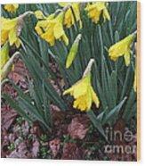 Daffodils In The Rain  Wood Print