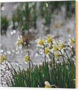 Daffodils On The Shore Wood Print
