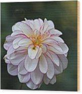 Dahlia # 5 Wood Print
