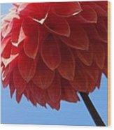 Dahlia #3 Wood Print