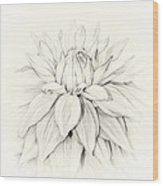 Dahlia 3 Wood Print