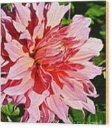 Dahlia 7 Wood Print