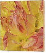 Dahlia - 812 Wood Print
