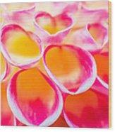 Dahlia Abstract Wood Print