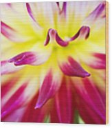 Dahlia Abstract Wood Print by Tim Gainey