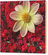 Dahlia And Kalanchoe Wood Print