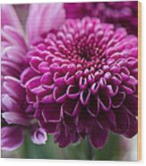 Dahlia And Mums Wood Print