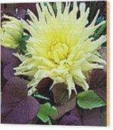 Dahlia And Potato Vine  Wood Print