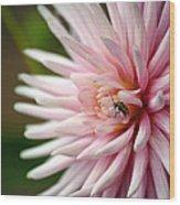 Dahlia Bug Wood Print
