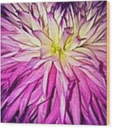 Dahlia Bursting With Color Wood Print