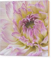 Dahlia Delight Square  Wood Print