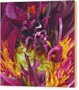 Dahlia Fairies Delight Wood Print