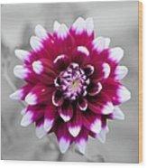 Dahlia Flower 2 Wood Print