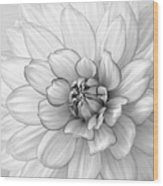 Dahlia Flower Black And White Wood Print