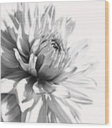 Dahlia Flower In Monochrome Wood Print