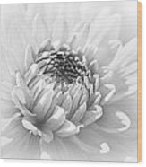 Dahlia Flower Soft Monochrome Wood Print