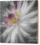 Dahlia Flower Splendor Wood Print