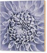 Dahlia Flower Star Burst Purple Wood Print