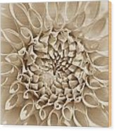 Dahlia Flower Star Burst Sepia Wood Print