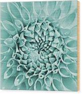 Dahlia Flower Star Burst Teal Wood Print