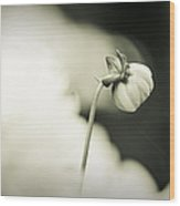 Dahlia II - Dreamers Garden Series Wood Print