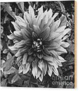 Dahlia In Black And White Wood Print