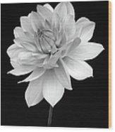 Dahlia In Gentle Shades Of Grey Wood Print