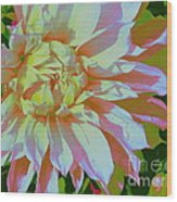 Dahlia In Pink And White Wood Print