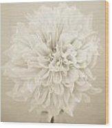 Dahlia In Sepia Wood Print