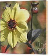 Dahlia Knockout Wood Print