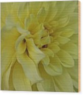 Dahlia Macro Wood Print