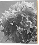 Dahlia Named Bodacious Wood Print