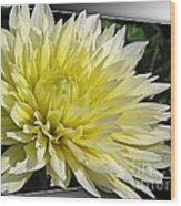 Dahlia Named Canary Fubuki Wood Print