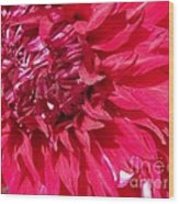 Dahlia Named Mingus Erik Wood Print