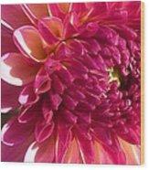 Dahlia Pink 1 Wood Print