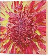 Dahlia Pom Wood Print