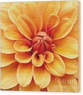 Dahlia Squared Wood Print