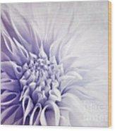 Dahlia Sun Wood Print