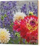 Dahlias Among The Lavender Wood Print