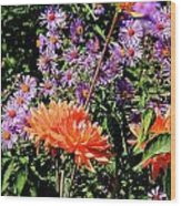 Dahlias And Asters Wood Print