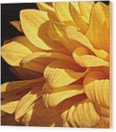 Dahlia's Light Side Wood Print