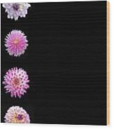 Dahlias On Solid Black Wood Print