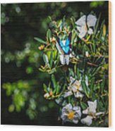 Daintree Monarch Butterfly Wood Print