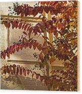Dainty Branches - Warm Autumn Colors - Washington D C Facades Wood Print